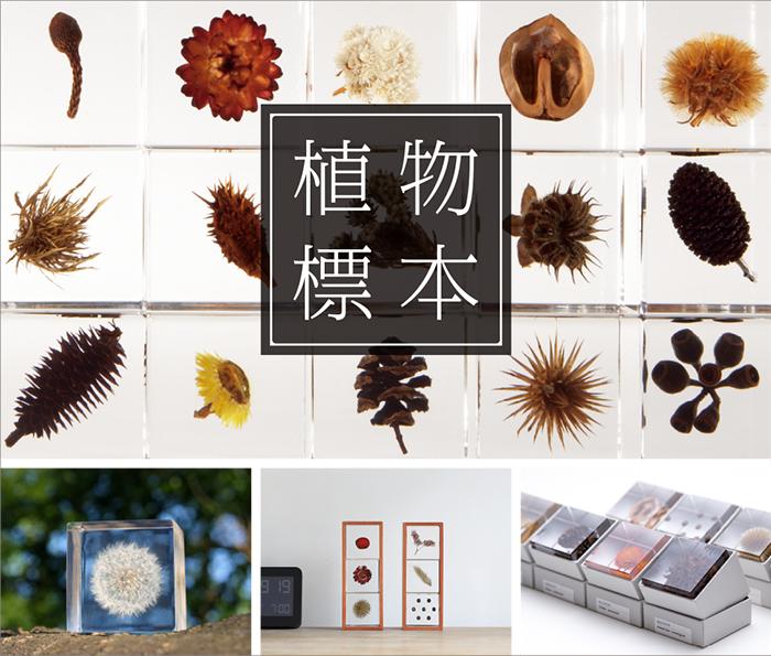 植物標本/メールマガジン